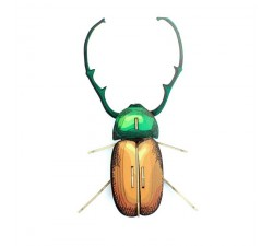 Calingratus insect en carton